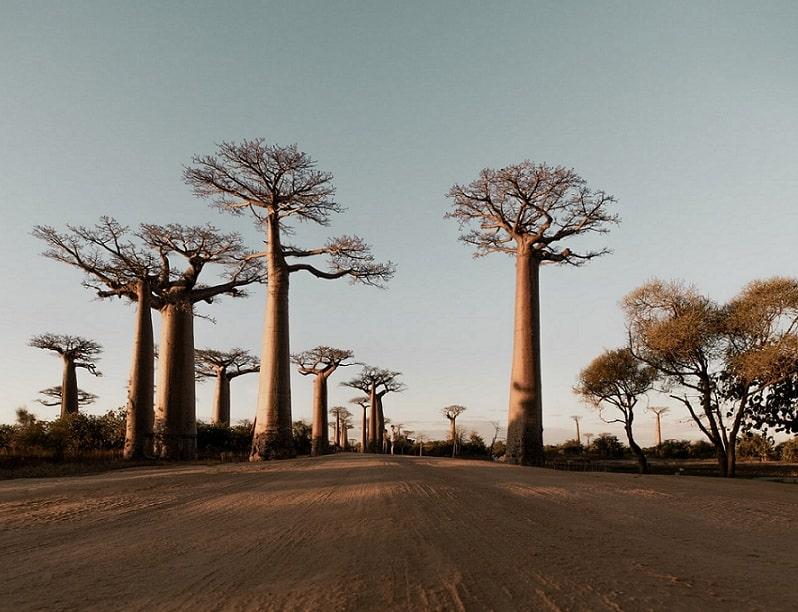 Rédaction contenu : Madagascar, en passe d'être la meilleure destination offshore